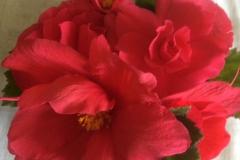 10 Fallen Begonia stem