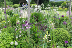 24 Beautiful Alliums ordnance house